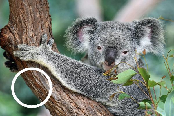 Australia LGTBI